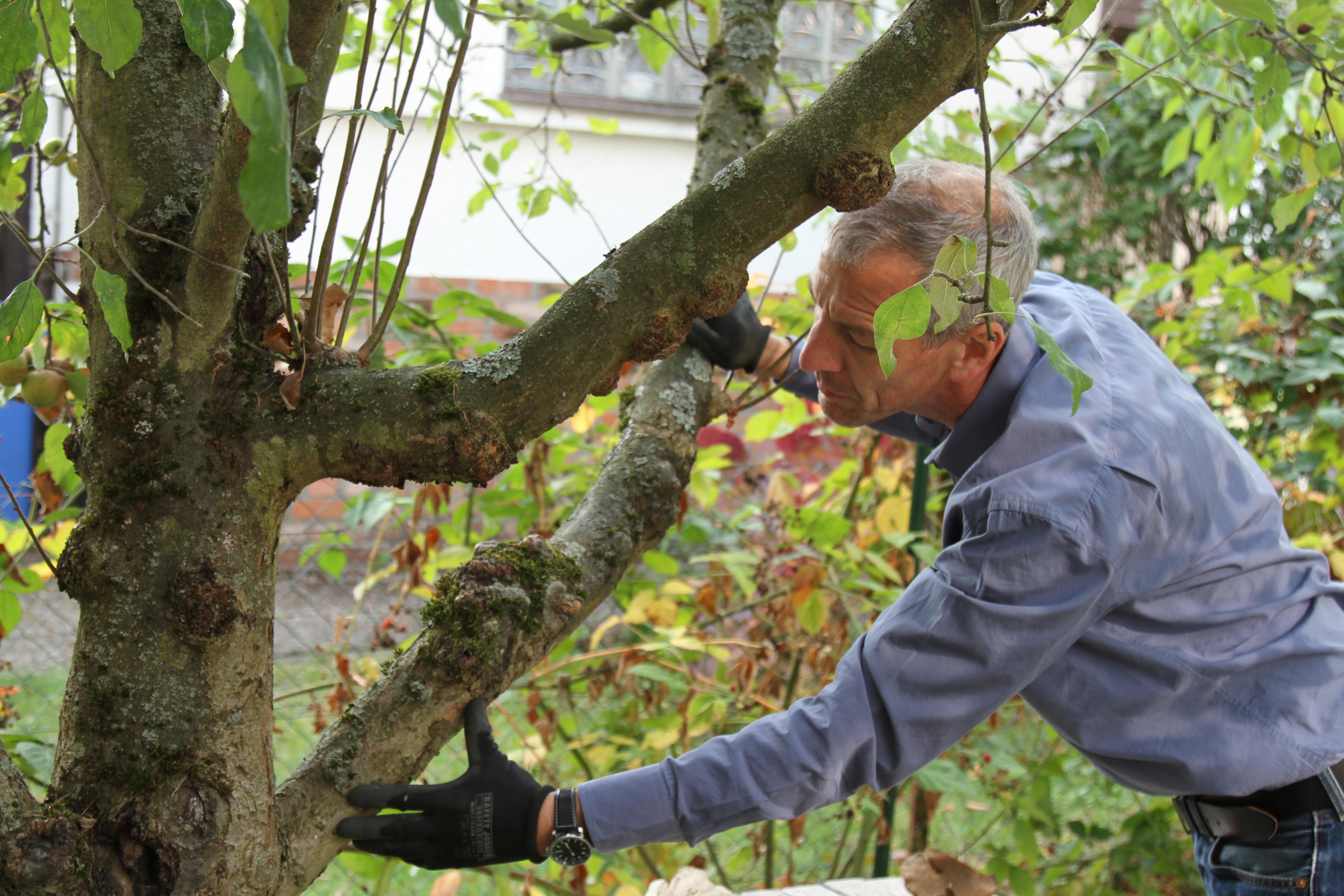 Sturmsicherer Garten Bäume Im Herbst überprüfen